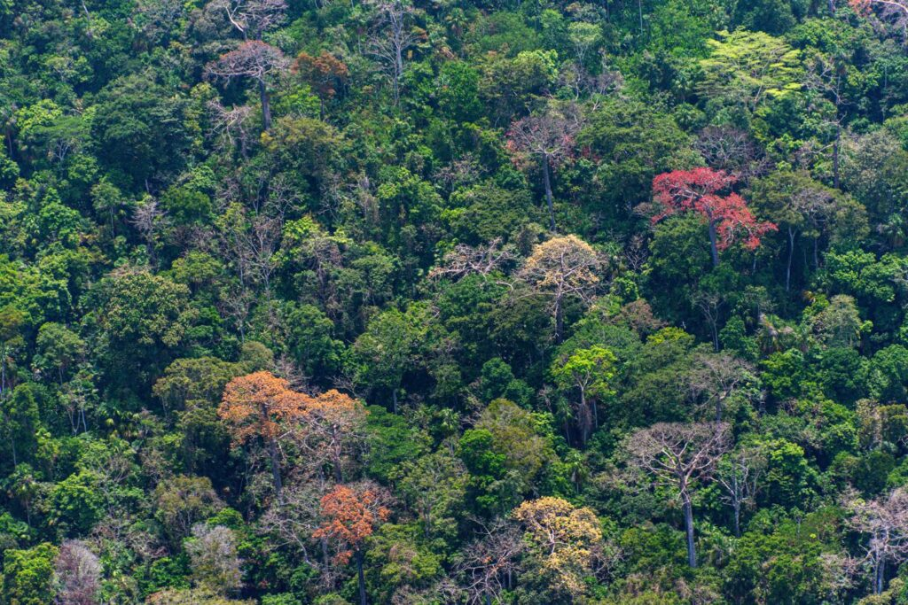 point tropical forests