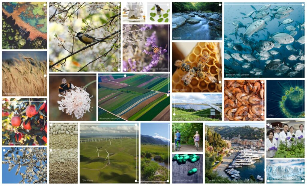 ecosystem services matrix