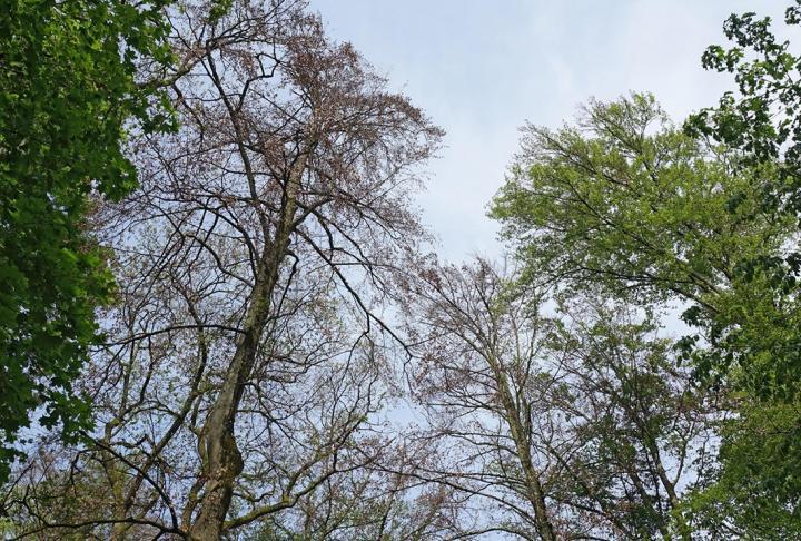 heat European forests