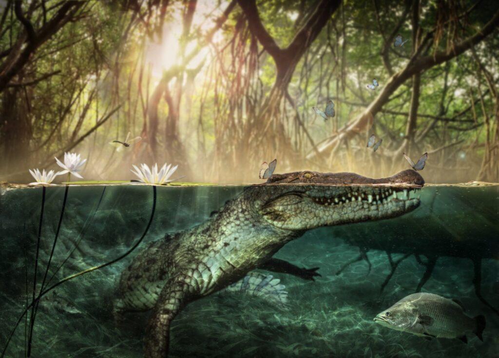 coccodrillo Atlantico Libia Crocodylus checchiai