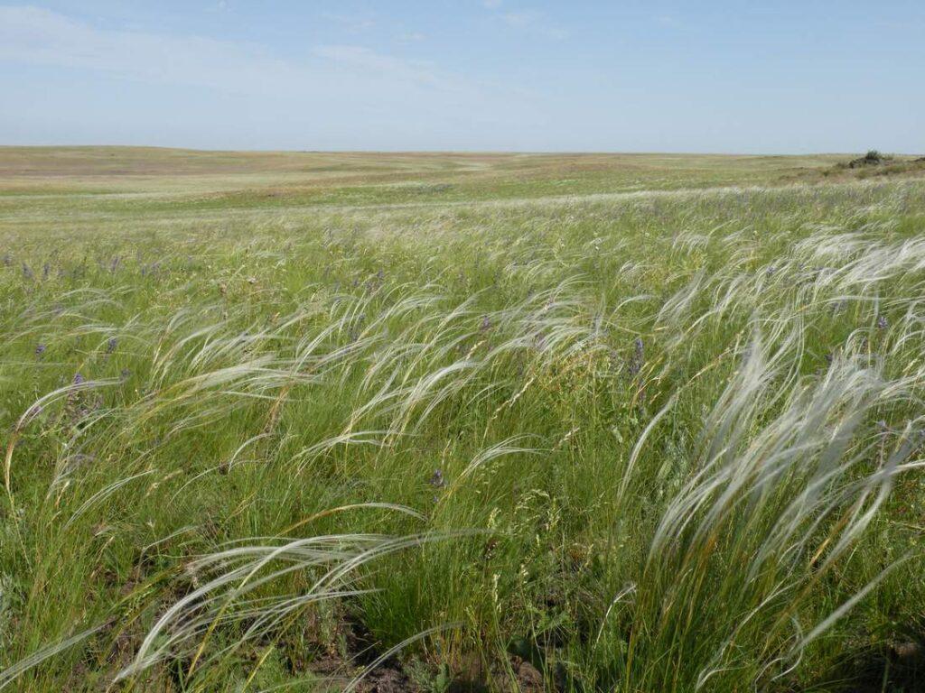 clima antrace Siberia cambiamento climatico pastori pastorizia