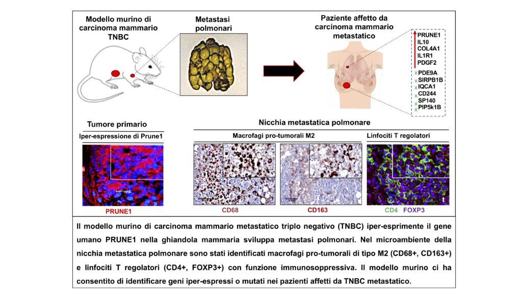 carcinoma triplo negativo