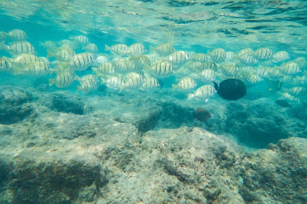 coral reef fishes protected marine areas
